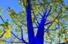 Blue Trees Volunteers Houston 365 Things Houston Texas Art