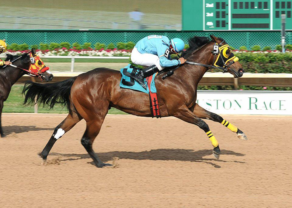 wager a day at sam houston race park 365 things to do in houston
