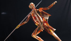 body-worlds-rx-health-museum-houston-2017
