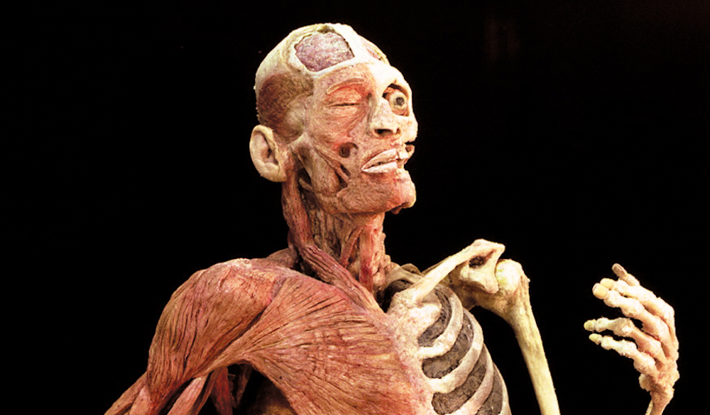 Body Worlds Rx Health Museum Houston April 2017 on Science Fair Display Guide