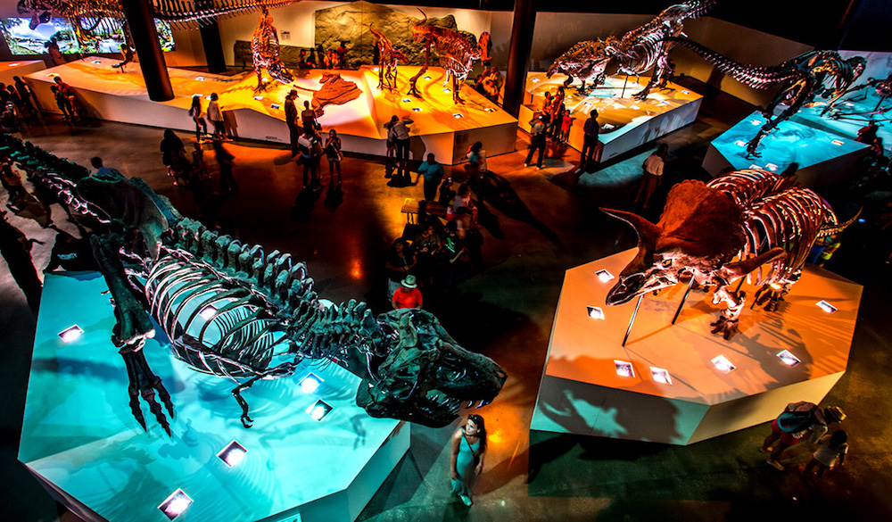 houston-museum-of-natural-science-discounted-admission-2019