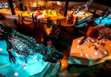 visit-houston-houston-experience-marketplace-HMNS