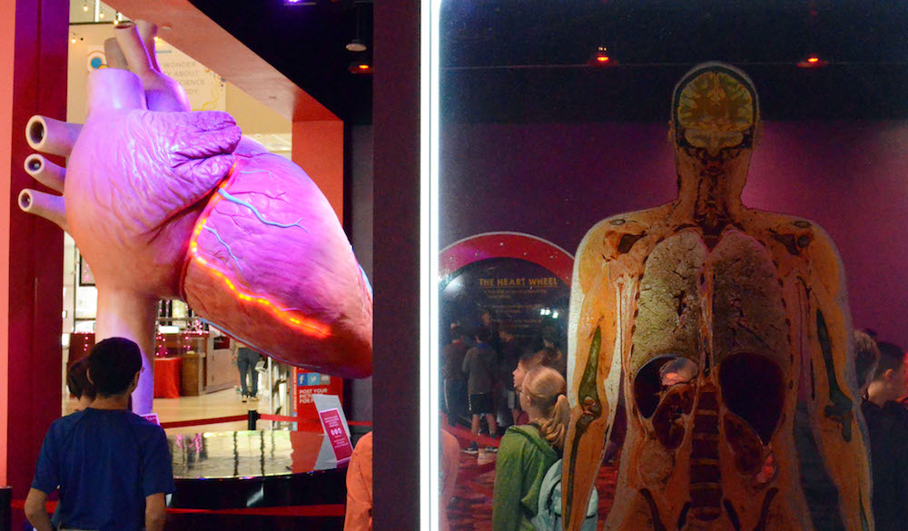the-health-museum-houston-Plastinated Bodies