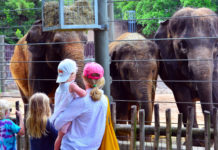 visitors-guide-houston-zoo-1