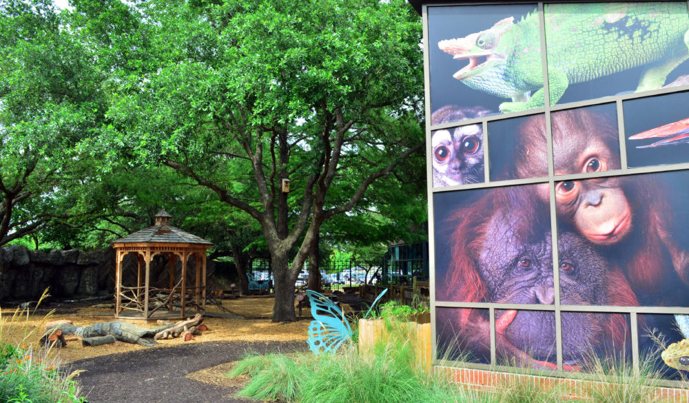 visitors-guide-houston-zoo-7