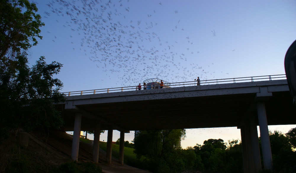 waugh-bat-bridge-50-best-things-to-do-in-houston-texas