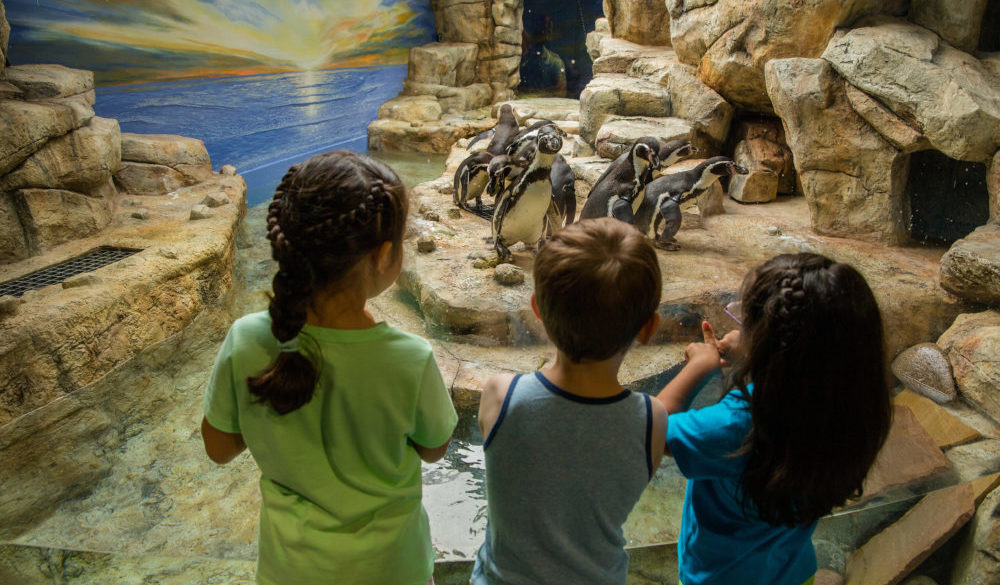 family-friendly-fun-attractions-museums-beach-galveston-island-2019-city-moody-gardens-penguins